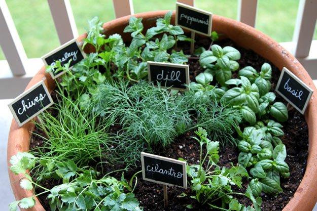 southern utah gardening
