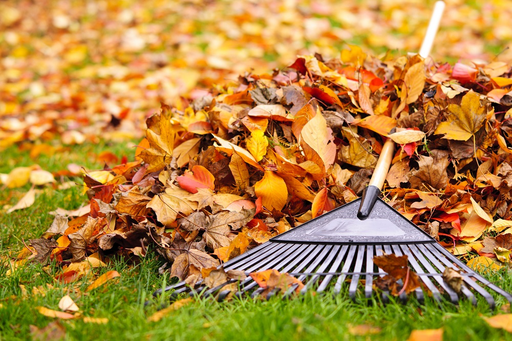 fall home landscape ideas
