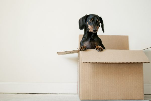 key tips for moving out